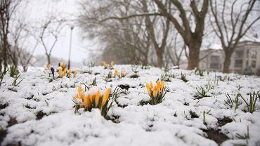 Pogoda na Wielkanoc. Czy czekają nas białe święta?
