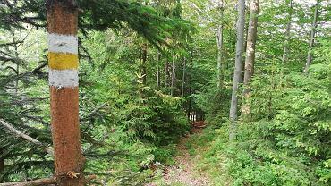 W Szczyrku otwarto nowy żółty szlak. Turyści dojdą nim na Małe Skrzyczne