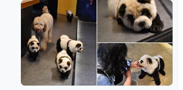 Pomalowane psy w chińskiej restauracji