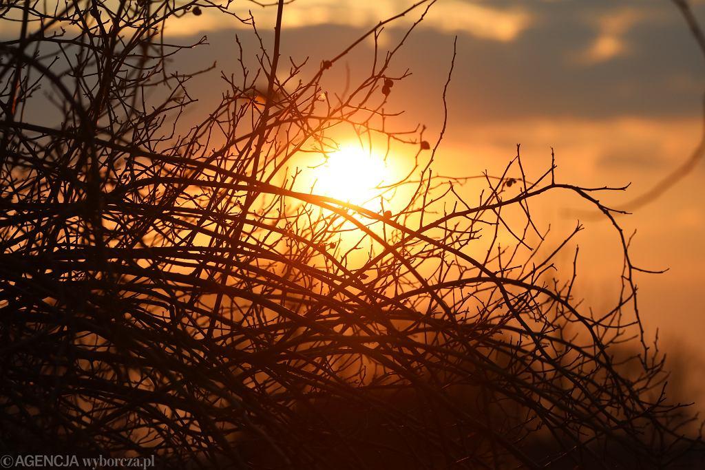 Słońce (zdjęcie ilustracyjne)