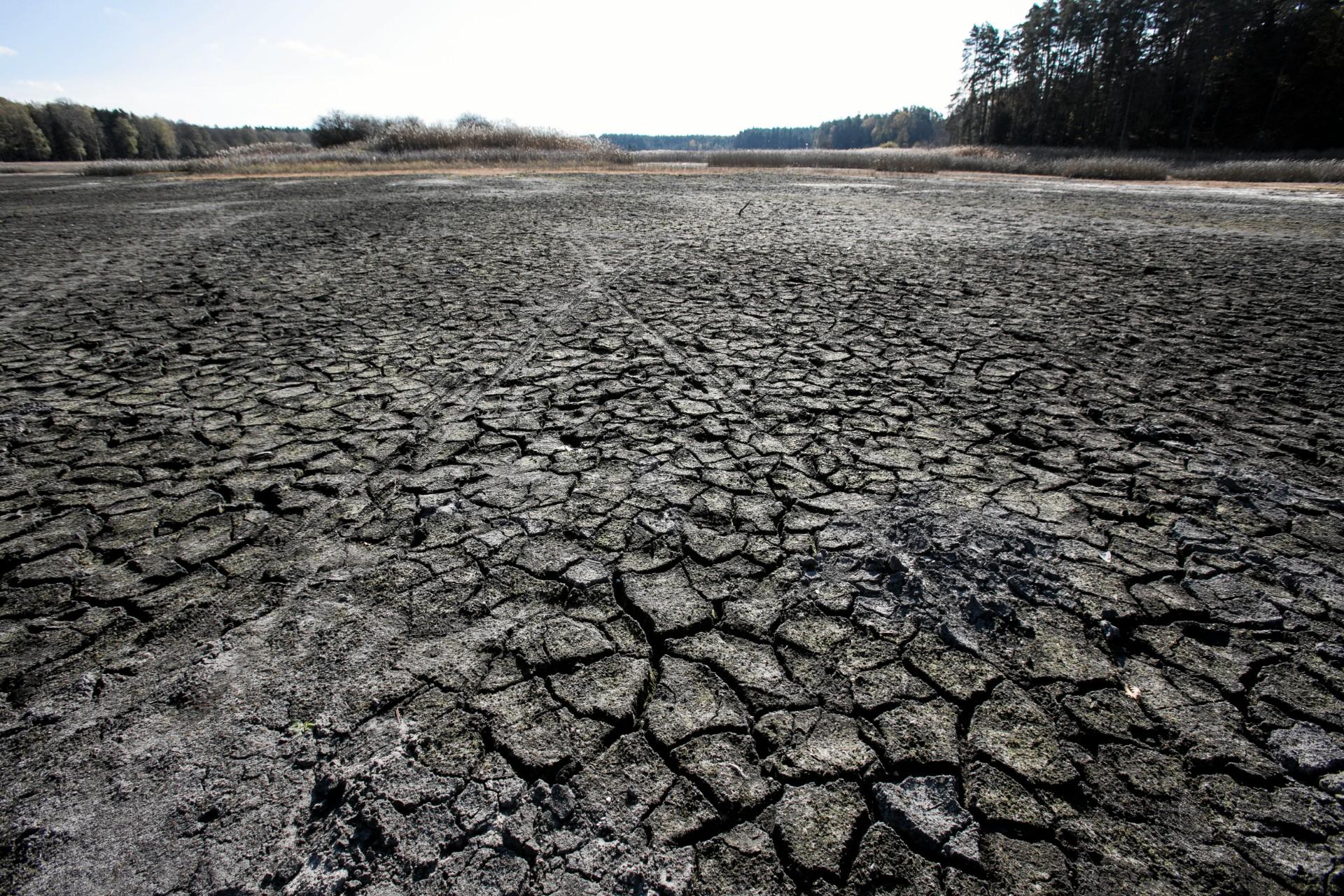 Częstsze występowanie suszy to wypadkowa kilku procesów związanych z efektem cieplarnianym (fot: Jakub Orzechowski/ Agencja Gazeta)