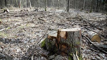 Organizacje przyrodnicze apelują do premiera ws. działań ministra środowiska Henryka Kowalczyka. Zdjęcie ilustracyjne