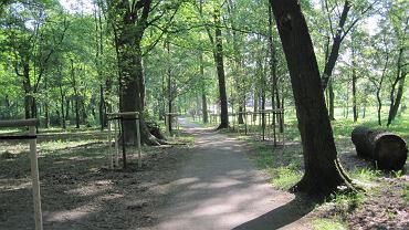 Drzewka w Parku Tysiąclecia