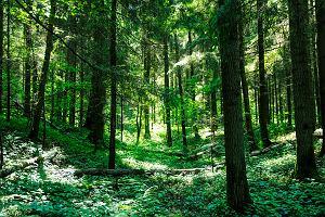 """Specustawa dla Stalowej Woli. Trzeba wyciąć lasy, by rozwijać miasto. Ale radni są zgodni: """"Historyczna szansa"""""""