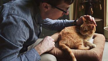 Koty przywiązują się do swoich opiekunów podobnie jak psy i niemowlęta (zdjęcie ilustracyjne)