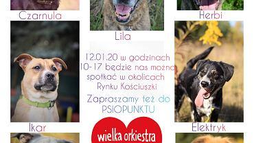 Psy z białostockiego schroniska będą wspierać 28. Finał WOŚP w Białymstoku