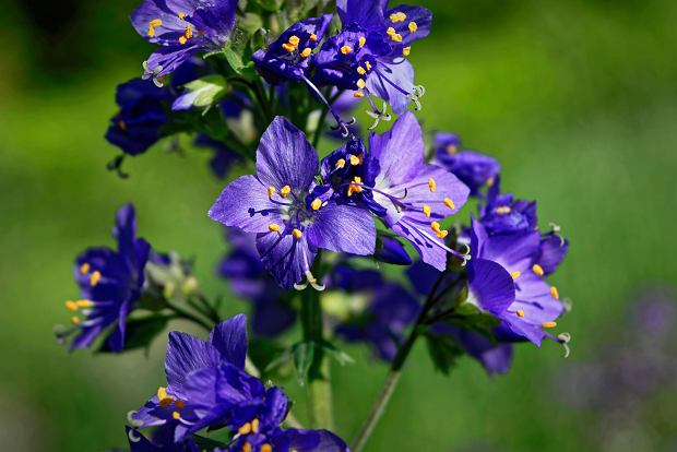 Kwiaty wieloletnie - jakie rośliny wybrać na długie lata? Najlepsze gatunki na działkę i do ogrodu