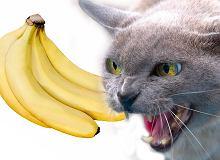 randki internetowe uwielbiają koty