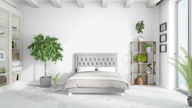 Kwiaty do sypialni - które wybrać, których unikać?