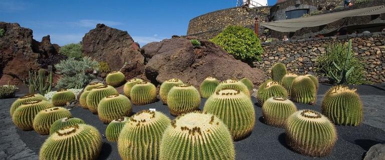 Teneryfa, Lanzarote, a może Madera? Wybraliśmy kilka kierunków na wycieczkę last minute. Niektóre za mniej niż 2000 zł