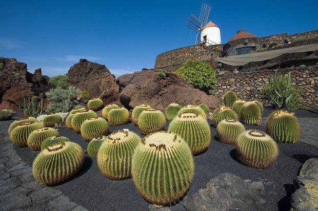 Lanzarote, Wyspy Kanaryjskie / fot. Shutterstock