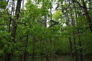 Ustawa o lasach w Sejmie. PiS zapewnia: Nie ma zamachu na ceny