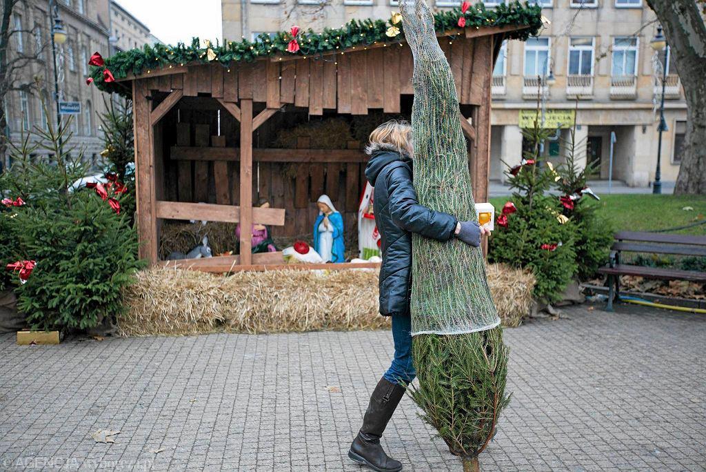 Akcja wydawania mieszkańcom Poznania choinek