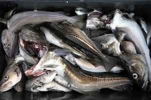 Ryby umawiają się z innymi rybami