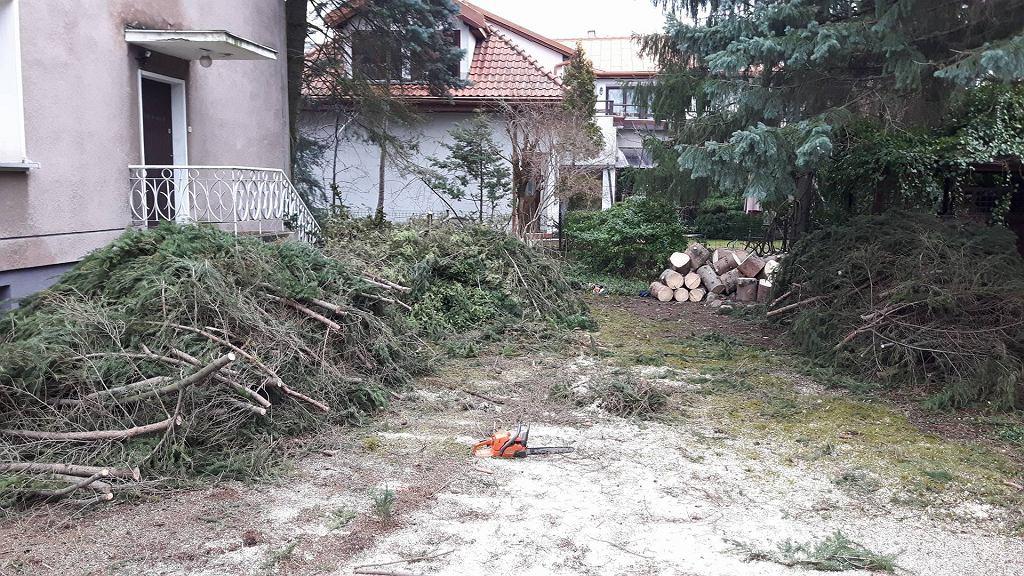 Wycinka drzew w Mieście-Ogrodzie Czerniaków