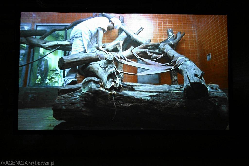 Wystawa Asylum Juliana Rosefeldta / Wystawa Asylum Juliana Rosefeldta/ADAM STĘPIEŃ