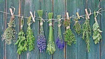 Niektóre zioła doskonale wpływają na układ trawienny i podkręcają metabolizm.