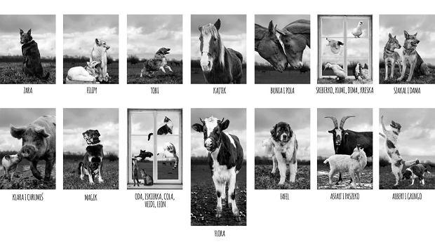 Na zdjęciach znajdują się zwierzęta - podopieczni prowadzonego przez Fundację Viva Schroniska w Korabiewicach.