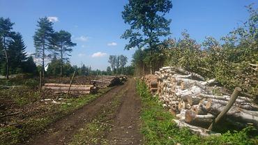 W okolicach ul. Wileńskiej w Sosnowcu - na terenach Lasów Państwowych - trwa 'wymiana pokoleniowa drzewostanu', którą mieszkańcy zwą po prostu wycinką