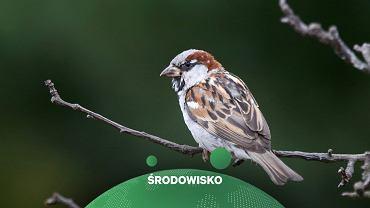 Zdaniem naukowców ptaki kurczą się z powodu zmian klimatycznych