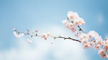 Wiosna 2019. Kiedy zaczyna się wiosna kalendarzowa, a kiedy astronomiczna?