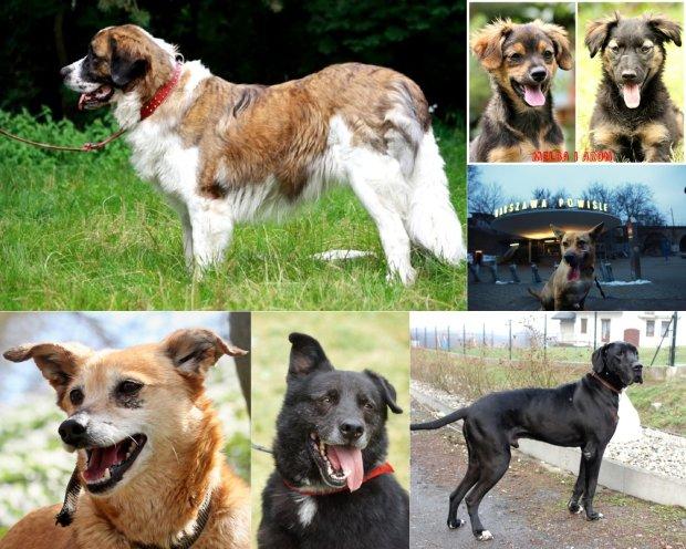 Zdjęcie numer 0 w galerii - Dziś Dzień Psa. Silva, Dżasper, Donek, Dyzio, Ofelia i inni czekają na nowy dom. Może znajdziesz wśród nich swojego wymarzonego psa? [PSY DO ADOPCJI]