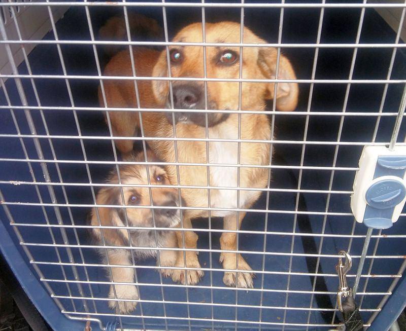 Ekopatrol odebrał psy właścicielowi posesji przy ul. Głębockiej