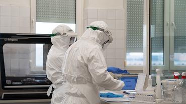 Testy na koronawirusa. Zdjęcie ilustracyjne