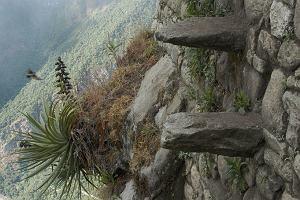 """Turysta nagrał, jak wchodzi na górę, skąd najlepiej widać Machu Picchu. Tę ścieżkę nazywają """"schodami śmierci"""""""