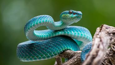 Sennik - wąż. Zdjęcie ilustracyjne