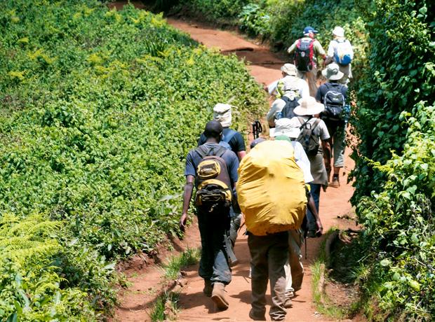 Podróże - jak zdobyć Kilimandżaro, podróże, afryka, Znowu robi się zielono - przez te kilka dni stęskniliśmy się za prawdziwym lasem