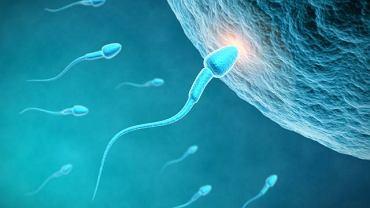 Nieprawidłowe stężenie leukocytów w nasieniu ma bardzo duży wpływ na jego jakość, a także na ewentualne zapłodnienie