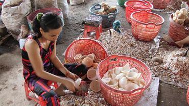 Manufaktura w Wietnamie (Delta Mekongu) - produkcja oleju kokosowego