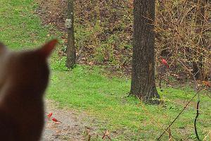 Podglądanie dzikich ptaków i zwierząt - na pewno fajniejsze niż podglądanie sąsiada. Jak zacząć?