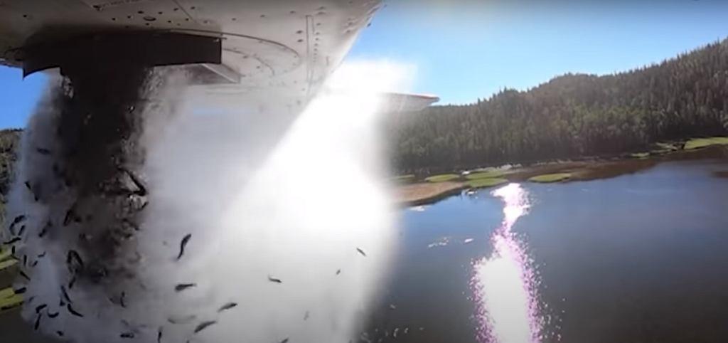 Zarybianie zbiorników w stanie Utah w USA