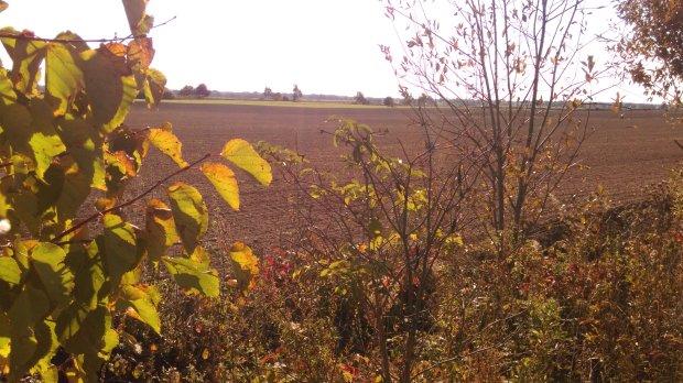 mazurskie pola