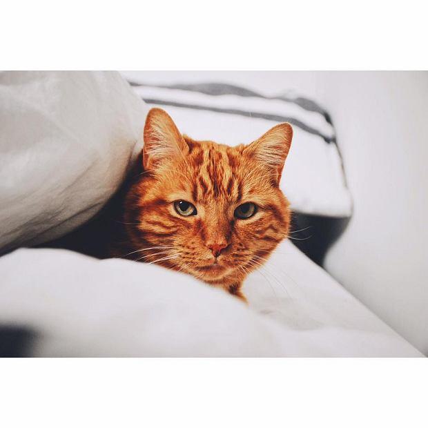 Zdjęcie numer 58 w galerii - Karmel, Daktyl, Kapitan Benny, Ptyś, Wiesław... Kochane i piękne - oto Wasze koty [GALERIA NA DZIEŃ KOTA]