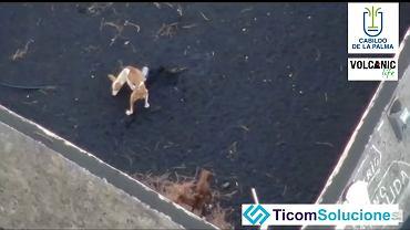 kadr z filmu 'Drone drops food for dogs trapped in La Palma by volcano lava' na YouTube