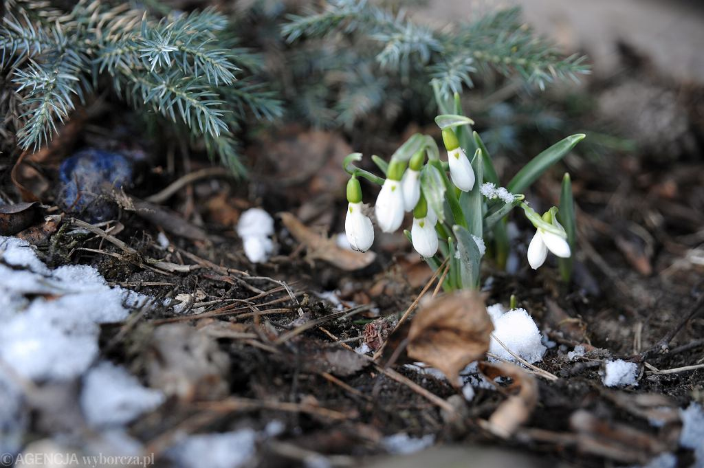 Po ostrej zimie już w weekend przyjdzie wiosna. I może być ogromnym zagrożeniem powodziowym