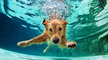 Jak schłodzić psa w upał? Basen może być bardzo dobrym rozwiązaniem.