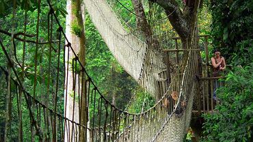 Mosty świata. Conopy Walk, Ghana / flickr.com