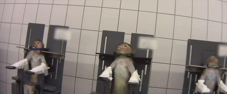 """""""Laboratorium grozy"""" z Hamburga zamknięte. Torturowano w nim małpy i psy"""