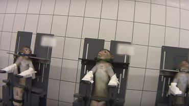 Zwierzęta cierpiące w laboratorium pod Hamburgiem - Kadr z filmu Cruelty Free International/ YouTube