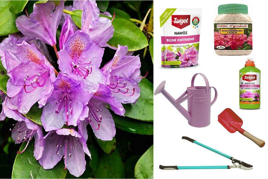 Rododendrony, akcesoria oraz nawozy