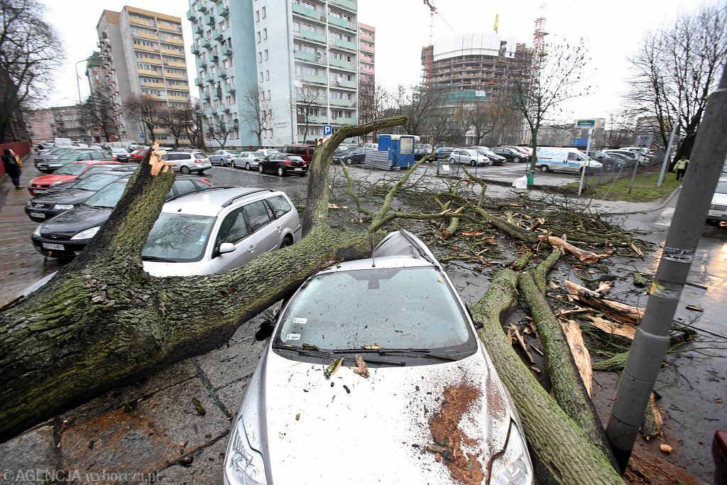 Drzewo przewrócone przez silny wiatr na samochody w Szczecinie