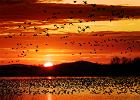 Jakie ptaki odlatują na zimę? Rozpoznawanie ptaków z dzieckiem [ZDJĘCIA]