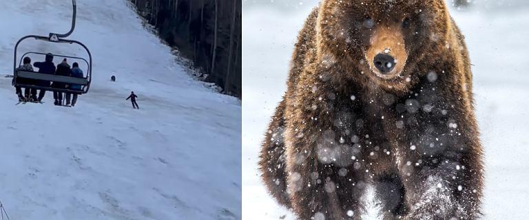 Pościg niedźwiedzia za narciarzem. Przerażające chwile na stoku w Rumunii