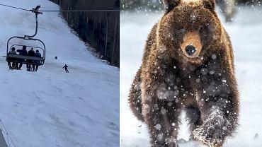 W Rumunii niedźwiedź ścigał narciarza