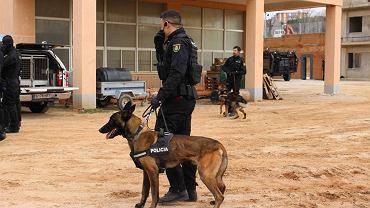 Hiszpania. Udaremniono zamach terrorystyczny na katolicką procesję w Sewilli (fot. ilustracyjna)