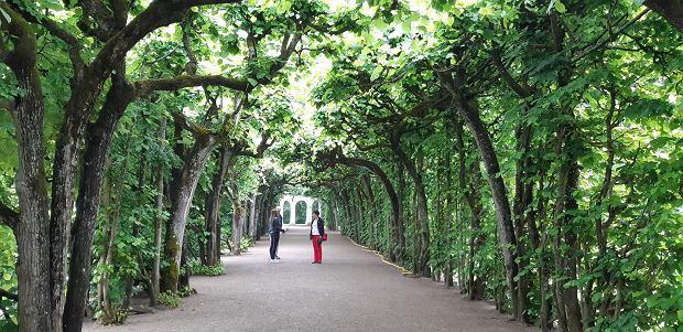 Spacer po zakamarkach Ermitażu - relaksująco i romantycznie